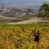 Weinfelder Bodega Miguel Merino, Rioja, Spanien