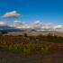 Weinlandschaft, La Rioja, Spanien