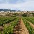 Weinlandschaft bei San Vicente de la Sonsierra, Spanien