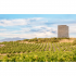 "Weinfeld vor dem Wehrturm ""El Castillo"", Bodega y Viñedos Luis Sáenz, Rioja"