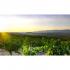 Sonnenuntergang im Weinberg von Luis Sáenz, Rioja, Spanien