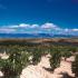 Weinlandschaft in Rioja Alavesa